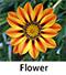 Flower new 2.jpg