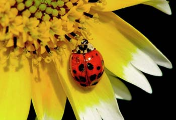 tidy-tips-and-a-ladybug-002-george-bostian.jpg