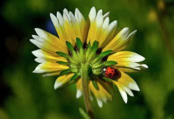 tidy-tips-and-a-ladybug-004-george-bostian.jpg